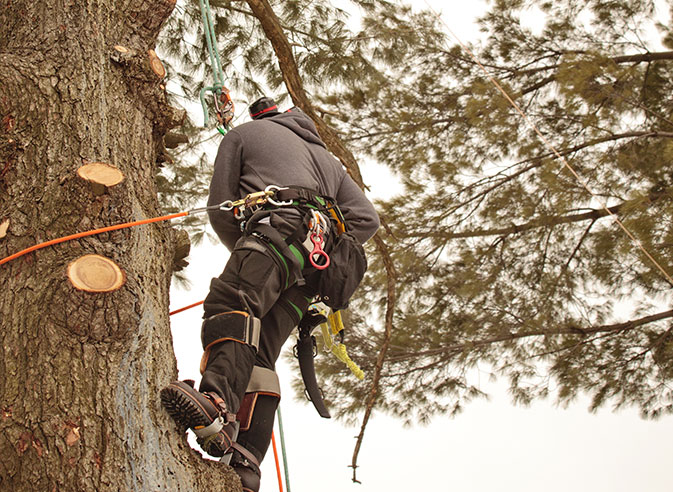 Payne Tree Care employee trimming a tree