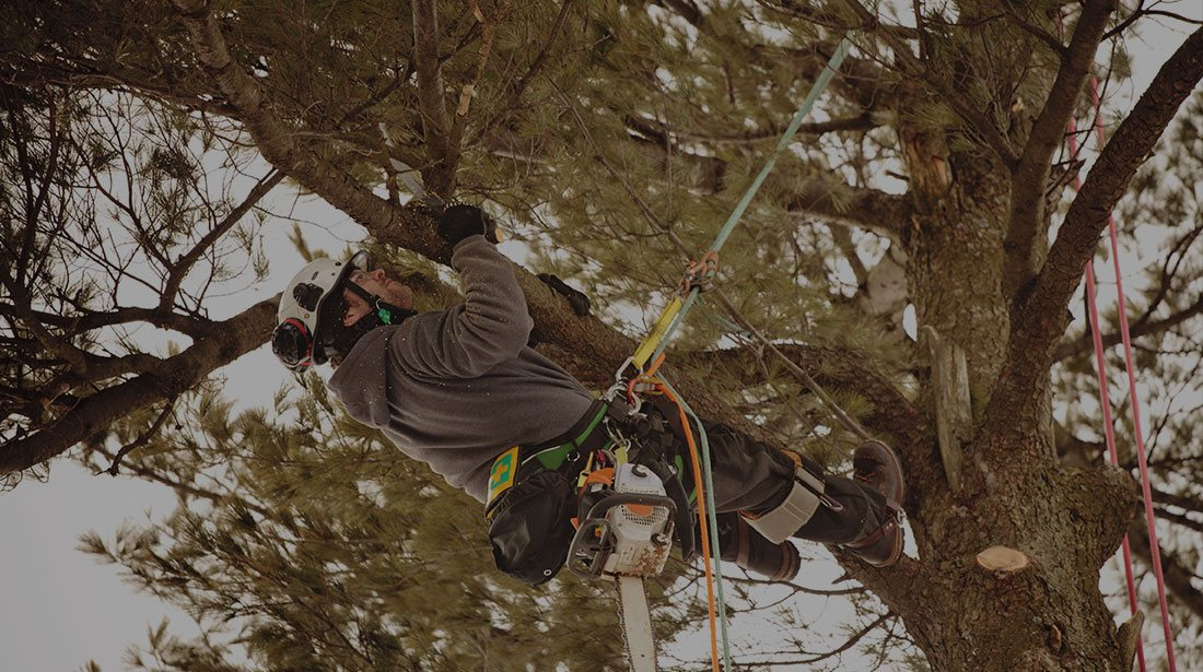 Payne Tree Care: Emergency tree removal in Sunnyvale, Mountain View and Los Altos