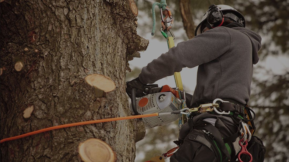 Payne Tree Care: Stump and tree removal in Sunnyvale, Mountain View and Los Altos