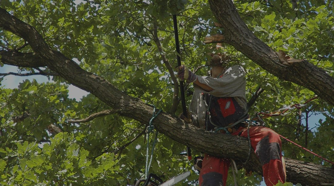 Payne Tree Care: Tree cabling and bracing in Sunnyvale, Mountain View and Los Altos