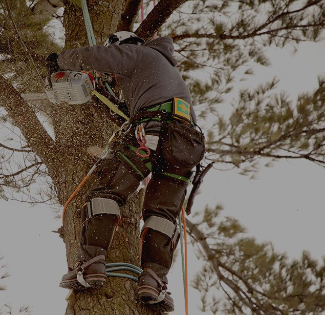 Payne Tree Care: Tree health in Sunnyvale, Mountain View and Los Altos