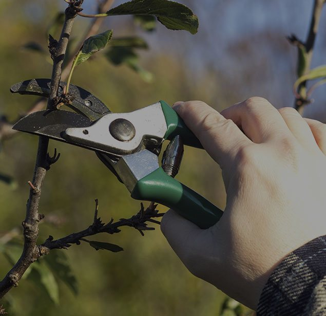 Payne Tree Care: Tree pruning in Sunnyvale, Mountain View and Los Altos